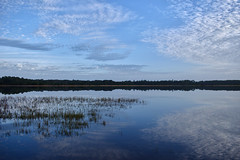 Reflections (McManus Photography) Tags: water lake blue sky clouds cloudscape flickr florida forest wet landscape lips travel tree trees green nikond5500 nikon d5500 wide angle