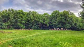 Dolmen / Hunebed D19, D20 twin of Drouwen, Drenthe, Netherlands - 1150