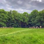 Dolmen / Hunebed D19, D20 twin of Drouwen, Drenthe, Netherlands - 1150 thumbnail