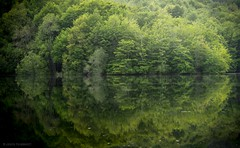 Symmetry... (ChusPS) Tags: green montseny fogarsdemontclús vallèsoriental barcelona catalunya catalonia forest foret bosc bosque water reflections symmetry nikon nikkor manfrotto nature biospherereserve unesco unescomab naturalpark spring light color lake