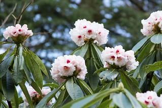 flower - birks of aberfeldy