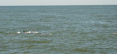 Cape May, NJ 5-24-18 (skybeing) Tags: dolphins capemay new jersey
