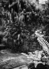 Rainy Days (Shastajak) Tags: fern foxgloves patio mygarden monochrome blackandwhite raindrops window