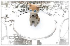 Wolfi sits down on the snow and lets it melt (WolfiWolf-presents-WolfiWolf) Tags: wolfiwolf wolfi wolf blue blaueaugen schnee schee snow hungary kalt heis eneamaemü universum stüben herzerl tisch desk rund rundum weis gold