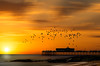 At the end of the pier (jeff.white18) Tags: pier birds flight fly sun water sky landscape nikon flickr