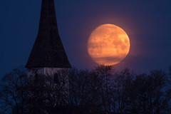 Moonlight (jarnasen) Tags: fuji fujinon xf100400mm telekonverter x14 moon bluehour church morning moonset landscape trees sky nordiclandscape sweden sverige scandinavia nature geo geotag järnåsen jarnasen copyright kaga