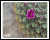 NYBotanicalGardens_040318_0034 (Roni Chastain Photography) Tags: flowers floral flower flowershow orchidshow nybg nybotanicalgardensbeautiful frames framed homedecor ronichaszenfoliocom