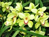 Orchids (Dino Langis) Tags: botanicalgardensflowers orchids