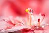 Drops & Flowers > gocce e riflessi by Mario Nicorelli con Nikon D300s macro fotografia (Mario jr Nicorelli ( Macrofotografia Drops Flowers) Tags: marionicorelli macrofotografia macro nikon nikond300s fotografia foto fotografico fiore flowers d300s drops nicorelli