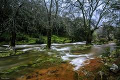Camino al Cimbarrillo (Peideluo) Tags: aguaenmovimiento largaexposicion long exposure tree water nature green árbol bosque río agua arroyo cielo parque