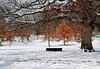 Strenght (LotusMoon Photography) Tags: winter landscape arboretum tree trees oak snow snowcovered annasheradon mortonarboretum seasons lotusmoonphotography