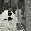 Drone (Bernhardt Franz) Tags: drone drohne bicycle cyclist shadow schatten mirroring spiegelung showcase floor cobbestone kopfsteinpflaster man buildings facades gebäude fassaden schaufenster unidentified surveillance supervision überwachung monitoring missile alien street ufo flugkörper blackandwhite bw