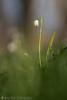 Märzenbecher (Christian Birzer) Tags: wiese grün nahaufnahme unschärfe draussen blühen blume makro märzenbecher unscharferhintergrund frühling naturschutz wald natur weis flora frühlingsknotenblume leucojumvernum pflanzenwelt vegetation bloom blooming blossom blur blurredbackground closeup conservation floral flower forest green isolated isoliert macro meadow nature natureconservation natureprotection outdoor protection spring springsnowflake white