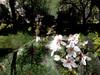 Subtract_0005 (troutcolor) Tags: imagemagick bash victoriapark evaluatesequence