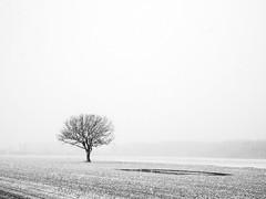 Un classic (Duric) Tags: neige hiver seul québec champ printemps snow field snowing winter