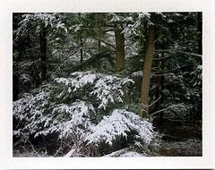 (babireley) Tags: roidweekspring2018 polaroid250 fujifilmfp100c pawilds pottercounty pa pottercountypa