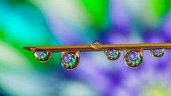 Drops on needle - 5334 (ΨᗩSᗰIᘉᗴ HᗴᘉS +23 000 000 thx) Tags: water h2o drop droplet macro needle color hensyasmine namur belgium europa aaa namuroise look photo friends be wow yasminehens interest intersting eu fr greatphotographers lanamuroise tellmeastory flickering
