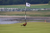 A Pheasant  ... is that 4 over or under or just past the hole   ?? (Dougie Edmond) Tags: maidens scotland unitedkingdom gb golf birdie bird turnberry course ailsa pheasant trump