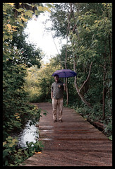 Mead Botanical Gardens (J. Parker Natural Florida Photographer) Tags: boardwalk grainy retro color stormy trail path garden meadbotanicalgardens people umbrella dxo dxofilmpack dxofilm outdoor mirrorless green orlando florida centralflorida summer orangecounty gardens botanicalgardens