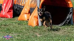 _DSC0489 (SeverX9) Tags: sony alpha 6500 70200gf4 dog run