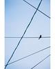 Lines (freyavev) Tags: lines geometry blue bird electricitylines bugojno centralbosnia bosnia bosna bosniaherzegovina vsco outdoor animal urban minimal minimalism telelens canon canon700d
