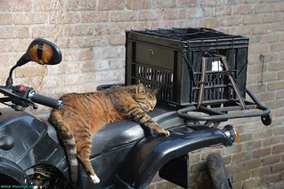 Neelix the Cat on my ATV.