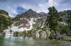 Agulla de Chuisé (sostingut) Tags: llacspirineus d750 nikon tamron haida lago agua árbol bosque madera serenidad montaña roca río paisaje naturaleza pirineos españa primavera nieve
