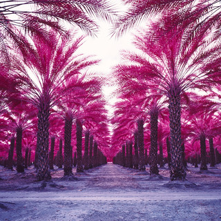 color infrared palms. mecca, ca. 2018.
