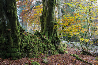 Mossy stone wall and trees - NK2_3163