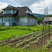 Casas de madeira e agricultura domiciliar