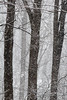 Three trees (cheryl.rose83) Tags: snow snowing snowstorm trees