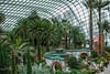 untitled-15 (SnailsPlace) Tags: snailsplacesingapore2018 snailsplace singapore fujifilm fujifilmxt2 xt2 mitakon mitakon35mmf095 gardensbythebay flowerdome cloudforest supertrees flowers trees green bokeh bokehlicious selectivefocus