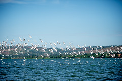 Jinja-H18_6335 (Carl LaCasse) Tags: uganda jinga lakevictoria nile river source people smile birds fishishing sunset beauty