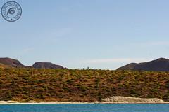 La Paz Baja California Sur (Viaggiatori del Mondo) Tags: whale shark squalo balena escursione la paz baja california sur bassa hotel mexico messico colonial coloniale mare spiaggia oceano ocean cortez beacutiful beaches bellissime spiagge laguna lagoon best beach world america usa vivamexico lapaz lapazmexico playa balandra spiaggiabalandra isla espirito santo espíritu isola island partida ballena los lobos islotes leoni marini foche sea lion seal ensenada grande