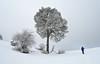 Cool... (Begoña Fernández) Tags: parquenaturaldelassierrasdecazorlaseguraylasvillas cazorlaseguraetalasvillaskonaturaparkea sierrasdecazorlaseguraylasvillasnaturalpark parcnatureldessierrasdecazorlaseguraetlasvillas jaén andalucía sierradesegura segura juanleón pinardelrisco miradordejuanleón gr247 pontones fuentesegura pinua pino pine pin pinus elurra nieve snow neige mendizalea montañero hiker randonneur paisaia paisaje landscape paysage ice frost cencellada hardrime givre primavera spring udaberria printemps espino elorriazuria aubépinemonogyne crataegusmonogyna commonhawthorn cold frío hotza froid