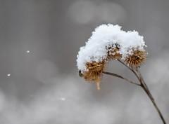Snowy spring. (agnieszka.a.morawska) Tags: manualfocus manuallens dof winter beyondbokeh bokehlicious bkhq snow helios bokeh