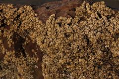 arthropods (Daniel Menzies) Tags: cluster canon80d canon18135mm nature barnacle arthropod marine tidal water ocean rock shore