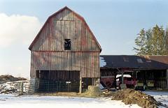 "Barn (""Photo Guy"") Tags: 35mmcolourfilm barnsandoldbuildings jupiter8lens56 landscape winterlandscape zorky41956"