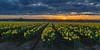 Skagit (jhiker5) Tags: washingtonstate skagitvalleytulipfestival tulips springtime flowers landscapes sunset daffodils johnalbert