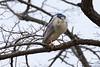 Night heron (tmo222) Tags: wildlife spring heron perch toronto nature