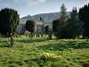 Church Daffodils (Hector Patrick) Tags: flickrelite fujifilmxpro2 fujinonxf23f2rwr graveyard lightroom614 northyorkshire rosedaleabbey stmaryandstlaurence yorkshire britnatparks churches daffodils