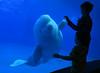 Friendly Whale (Ian@NZFlickr) Tags: whale aquarium tank children reaction interaction taiwan