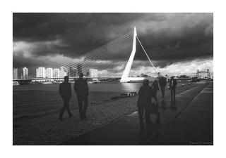 Rotterdam - Erasmusbrug V