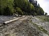 Beach exposure (Tony Tomlin) Tags: crescentbeachbc britishcolumbia canada southsurrey driftwood logs pebbles