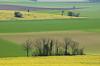 Couleurs de printemps (Corinne Queme) Tags: champs blé colza terre arbres fleurs couleurs jaune vert printemps morvan neuffontaines