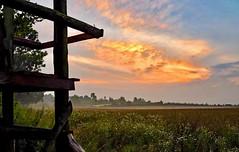 Holst.Schweizjpg (lotharmeyer) Tags: morgens feld nebel hochsitz landscape natur sky sonnenaufgang gräser lotharmeyer nikon trees green orange clouds