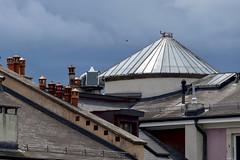 Martinet (jeanmichelchuiche) Tags: oiseau irondelle genève suisse ch toits tuiles verrière cheminées nuages clouds ciel