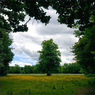 The Tree in the Field