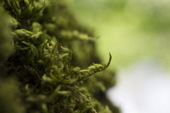 MossFloss (tiki.thing) Tags: moss green bokeh blur nature flora macro vert greenery light thursday colourfulthursday cmwd cmwdgreen plant leaf canon