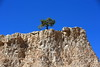 Resilience (Golden Ginkgo) Tags: rocks tree utah bryce canyon national park